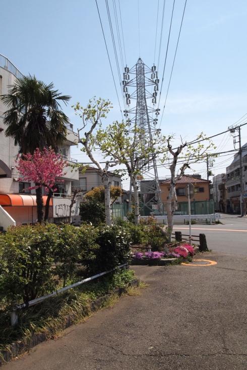 Birch Bonsai Tokyo